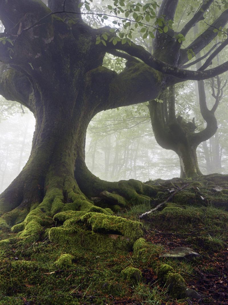 Parque Natural de Gorbea (Vizcaya)