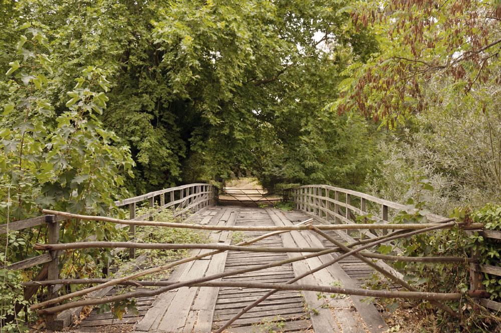 Puente de madera en el Bosque de Choupal, Portugal