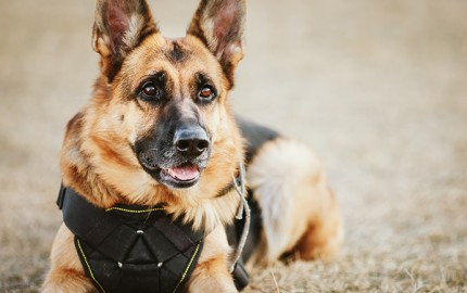 perro-policia-3